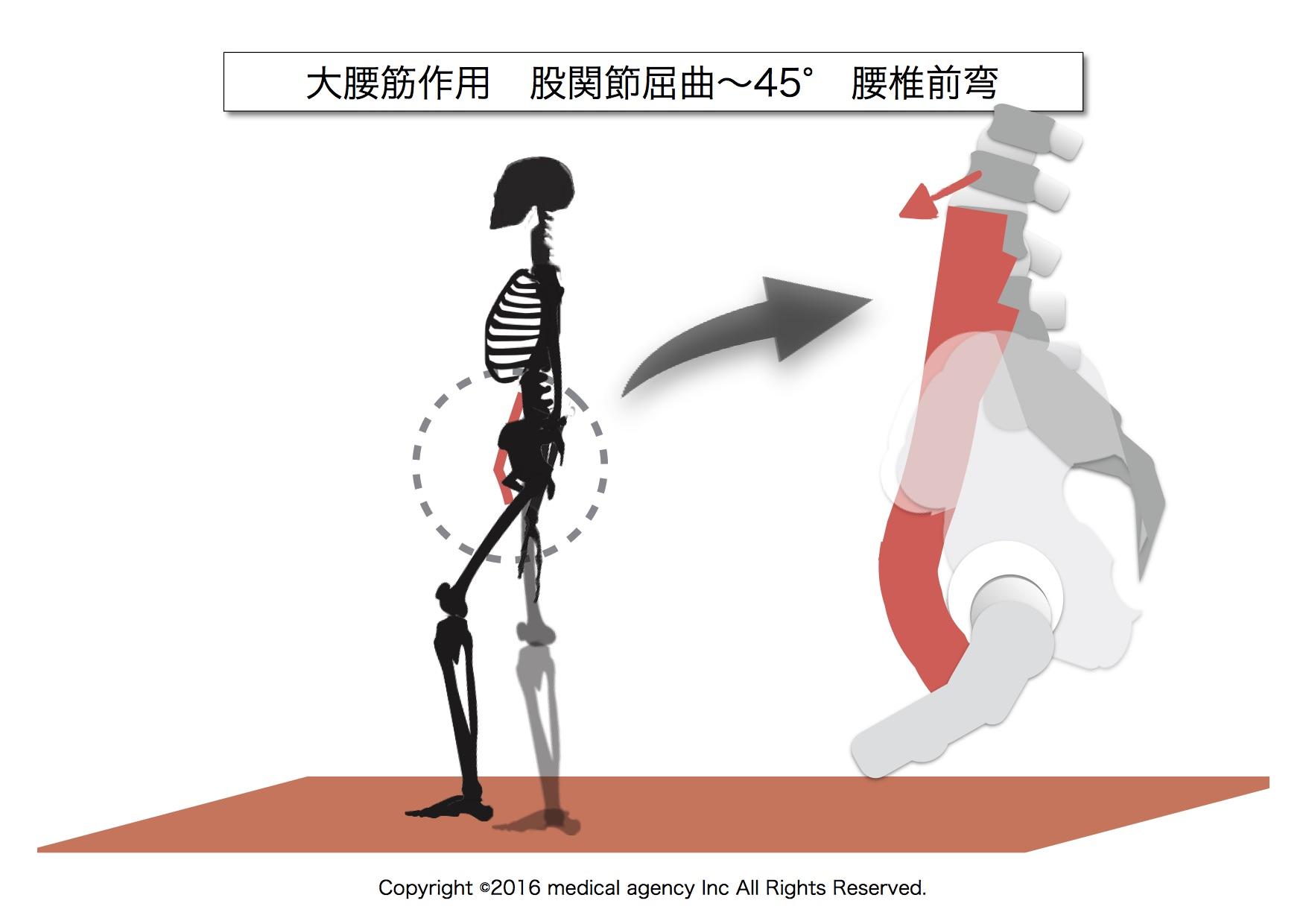 大腰筋 股関節屈曲40