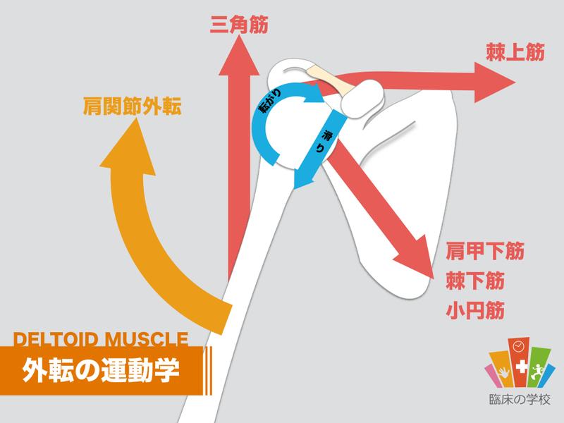 三角筋の外転の運動学